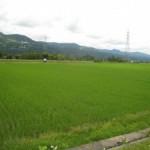 魚沼米を見てきました