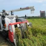 阿久比米 定点観察 ⑧収穫作業